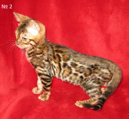 Кошечка 2 на продажу