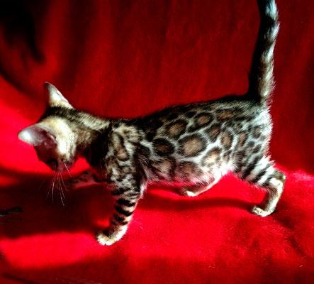 Кошка остается в питомнике
