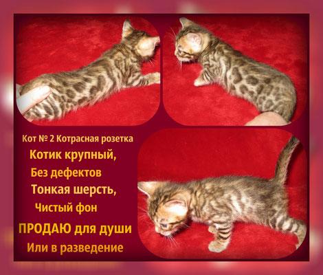 Цена котенка 15 т.р