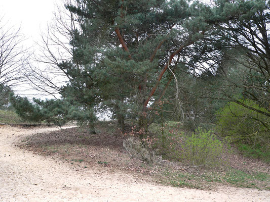 Im Trockenrasengebiet (A.-Schütte-Ring), Foto: U. Postler