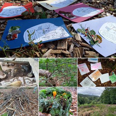 Wald- Und Naturerleben