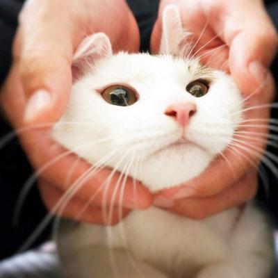 まお:♀:千葉:保護された時はボロボロだったけど、幸せな家族と暮らせるようになったまお。ウサギみたいな顔してる?:2016/11/09