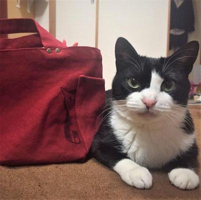 みぞれ:♀:神奈川:みぞれが降る日に保護されたみぞれちゃん。譲渡会でご主人の膝から動かなくなったとか。自分で優しい家族を決めた?ネコトヒトのバッグと記念撮影をパチリ。:2016/01/19:掲載商品⇒ポケットから猫が見えてるウォッシュスタッズトートバッグ
