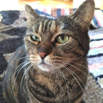 デー:♀:神奈川:大きな声のおしゃべり猫。:2016/10/09