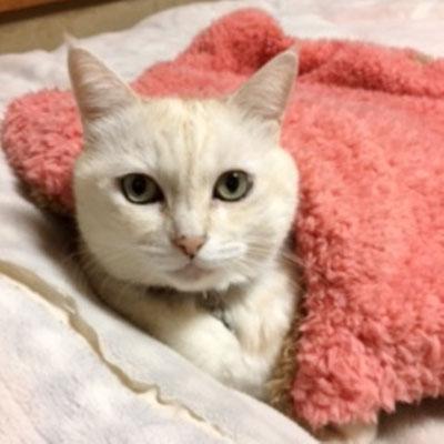 メイ:♀:東京:一緒に暮らす犬のルイちゃんのベッドを奪って寝ていたメイちゃん。これからは、ふわもこブランケットで寝てくれるようになるのかな?:2016/11/16:掲載商品⇒ふわもこブランケット(ビッグ)