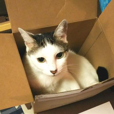 パンダ:♀:東京:網戸をかいくぐり自力で家猫生活を手に入れる。人見知りもするけど、かなりの甘え上手。:2016/10/15