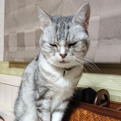 蘭:♀:香川:現在推定17歳。気に入らないと舌打ちしちゃう蘭ちゃん。17歳にして高速猫パンチを発動させる元気な女の子。:2017/01/19