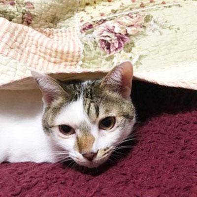 ネコ:♂:山口:溝のなかで泣いていて保護されたネコくん。現在猫6匹犬1匹の大家族の中で幸せに暮らしてます。:2016/11/12