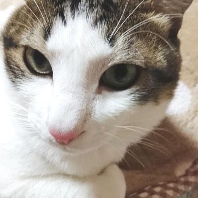 塁:♂:香川:愛すべき末っ子気質の塁くん。温和で小さいことは気にしない性格だから、猫団子の真ん中にもズイズイ突っ込んで行くらしい。:2017/01/19
