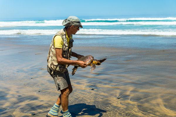 Freilassung der befreiten Schildkröte bei der Wanderung am Donnerstag