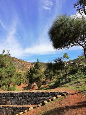 Waldgebiet bei Betancuria
