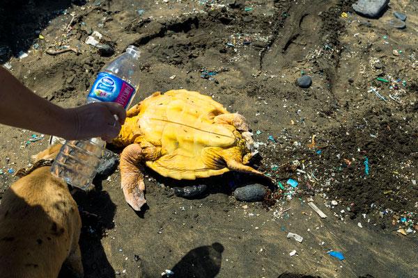 Schlidkrötenrettung am Strand von Cofete