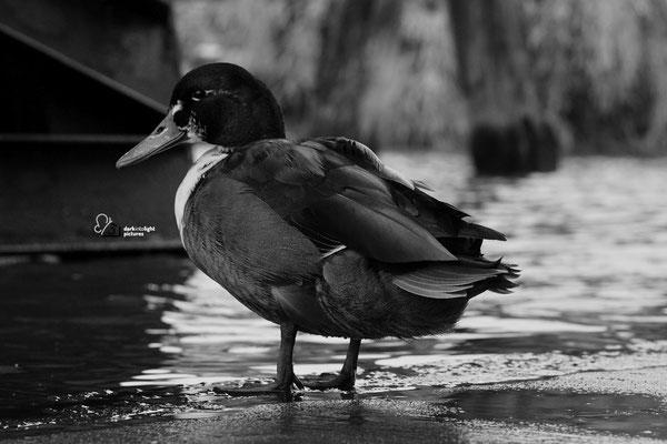 eine weitere Aufgabe des Fotomarathon Lübeck, das Motiv zeigt eine Ente
