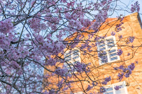 Frühling  am Kieler Schloss