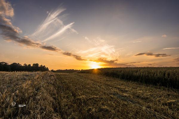 Getreidefeld in Dänischenhagen