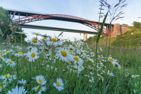 Blumen am Ufer des Nord Ostsee Kanal unter der alten Levensauer Hochbrücke