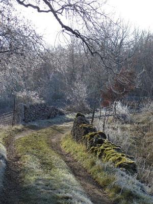 chemin en hiver tout prêt du Mas de La gariotte
