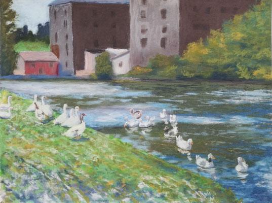 Gänse an der Lahn, Pastell, 30 x 40 cm