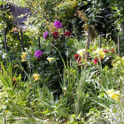 Dahlien und Taglilien