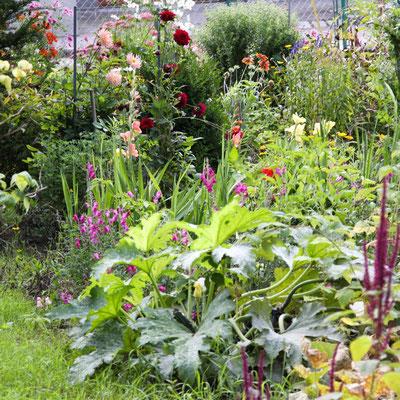 Zucchini und Sommerblumen