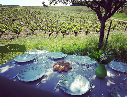 picnics-Vouvray-vineyard-vines-wine-tasting-Loire-Valley-Tours-Amboise