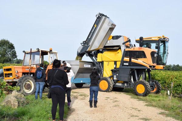 participate-hand-harvest-workshop-Chenin-Blanc-Loire-Valley-Vouvray-Tours-Amboise-pick-grapes-wine-tours-Rendez-Vous-dans-les-Vignes
