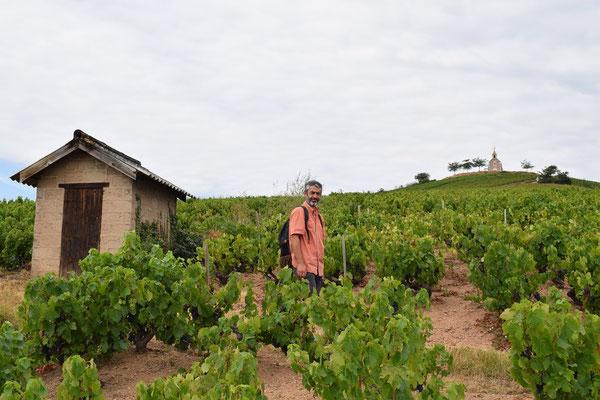 vineyard-lodge-cabotte-Fleurie-Beaujolais-France-wine-tourism