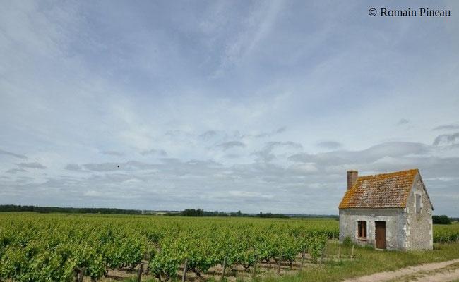 vineyard-lodge-Montlouis-sur-Loire-Loire-Valley-wine-tourism