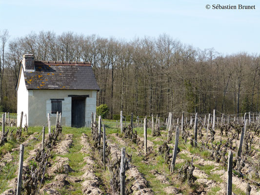 vineyard-lodge-reugny-Loire-Valley-AOC-Vouvray-wine-tourism