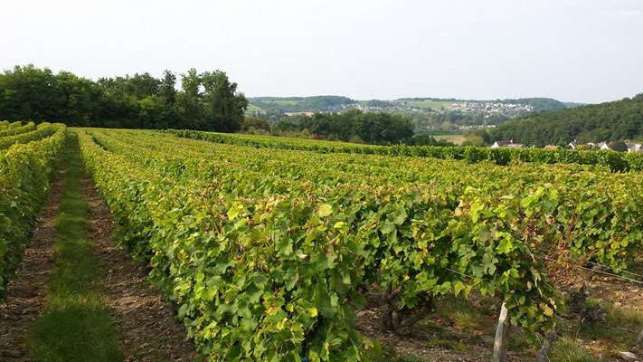 Vouvray-wine-tour-guided-visit-vineyard-cellar-winery-wine-tasting-in-vines-Loire-Valley-France-Tours-Amboise-Myriam-Fouasse-Robert