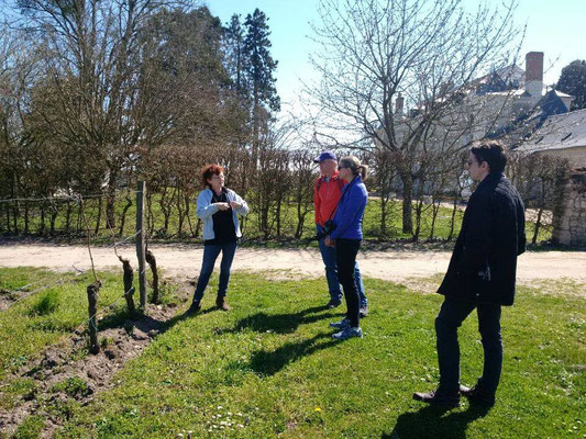 Guided tour in the vineyard in Bourgueil