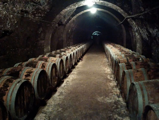 Visiting a cellar in Chinon