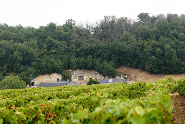 unique-and-special-wine-tour-in-Vouvray-vineyard-Loire-Valley