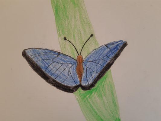 Schmetterling von Maxi, Malakademie KIDS, 2021