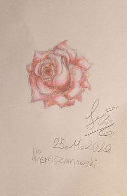 Rose von Iris N. im Lockdown, Dez. 2020