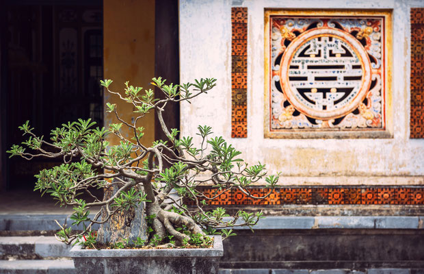 Bonsai Baum in Hue