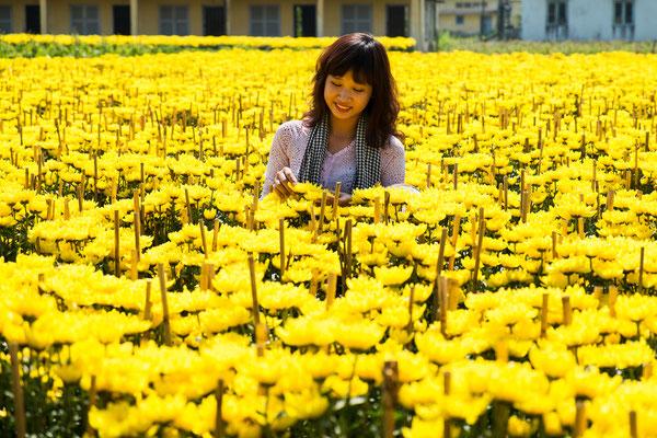 Vinh Long ist bekannt für seine prächtigen Blumenfelder.