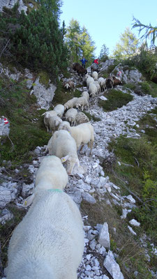 Bildergalerie vom Schafe holen