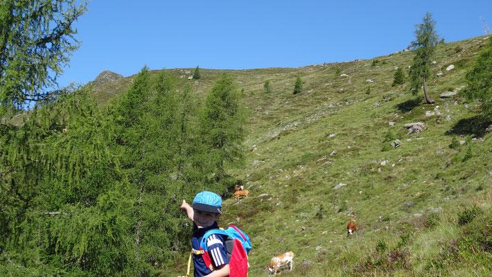 links oben der Gipfel in Sicht