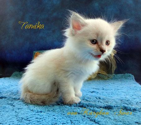 Kleine, süsse Kornblume = Tamika Talasi