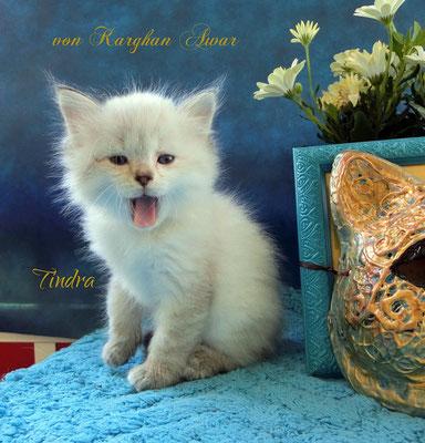 Tindra Tamasha = Funkeln, glückliche Begebenheit