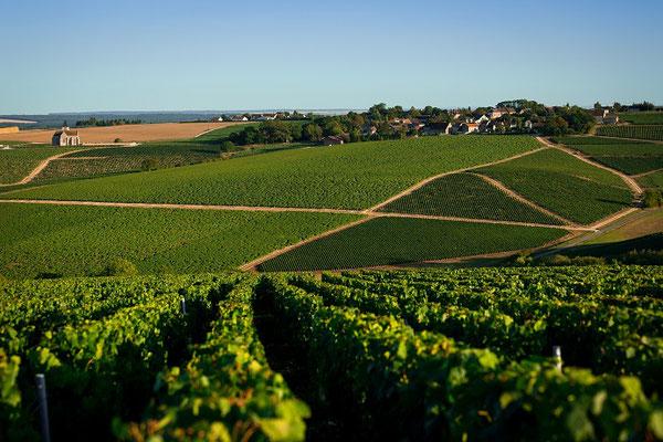 Vignoble de Préhy - Crédit BIVB/Ibanez