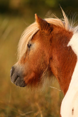 foto-aldente.net Pferdefotografie - Pferdeshooting - Tierfotografie