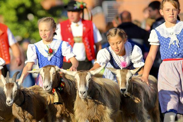 foto-aldente.net - Kirchberg  - Viehschau - Fotografie - Tierfotografie