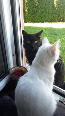 Jimbo & Penelope
