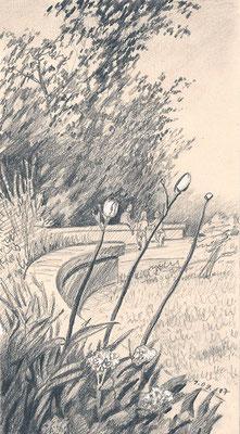 Ботанический сад. 2017. Тонированная бумага, карандаш, белила. 17 х 10