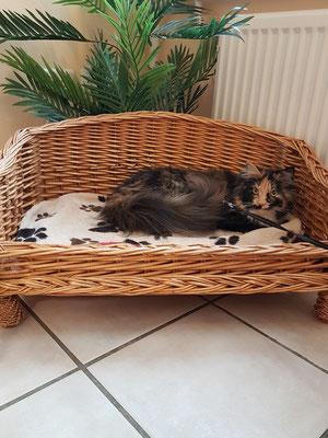 Auf dem Sofa im Wartezimmer können Hund oder Katzen der Heider Kleintierpraxis Dr. Gruber gleichermaßen gemütlich entspannt  liegen