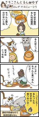 アイシアさま にゃんちゅーぶ はじめて猫を飼う方へ