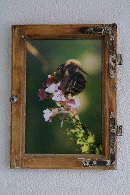 antikes kleines Fenster mit Bienenfoto Nahaufnahme
