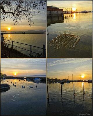Evelyne Blum's ART zu fotografien Sonnenuntergangsstimmung Murten eiskalter Tag